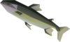Leaping trout detail