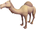 Ali the Camel.png