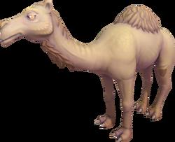 Ali the Camel