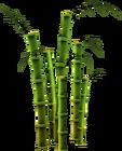 Bamboo (tree)