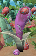 Pahtli plant