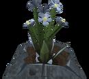 Salve nettles (plant)