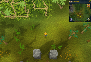 Compass clue Karamja north of nature altar