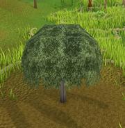 Yommitree