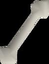 Polished giant rat bone detail