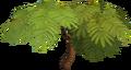Acadia tree.png
