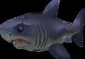 Sayln the Shark pet.png