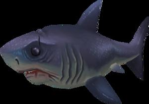 Sayln the Shark pet