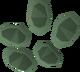 Valerian seed detail