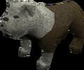Bulldog (white) pet.png
