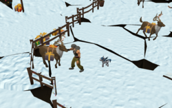 Stroking a reindeer