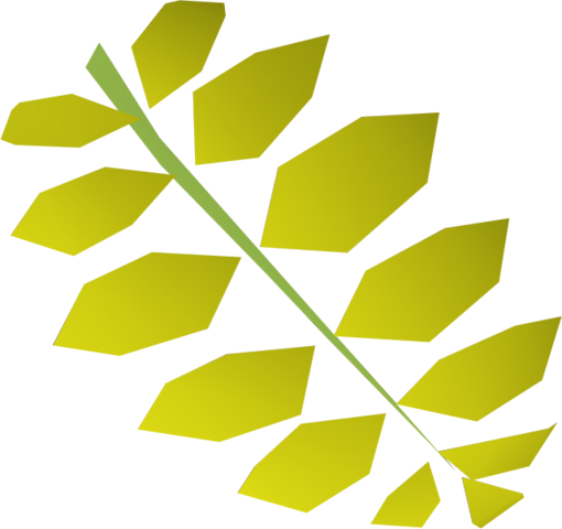 File:Curry leaf detail.png