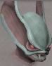 Sentinel Gorthaur chathead.png