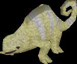 Baby chameleon (desert)