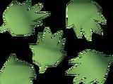 Cactus seed