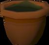 Oak seedling detail