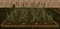 Reeds5.png