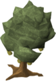 Quince tree.png