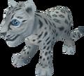 Snow leopard cub pet.png