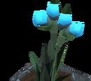 Soulbell (plant)