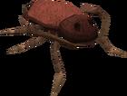 Warped roach old
