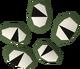 Buckthorn seed detail