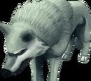 Adolescent White wolf