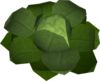 Cabbage (New Varrock) detail