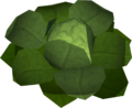 Cabbage (New Varrock) detail.png