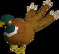 Pheasant3tail