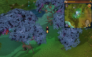 Scan clue Tirannwn between magic trees west of Lletya