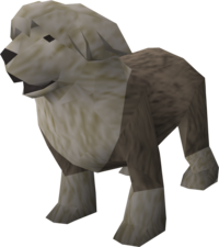 Sheepdog (grey) pet