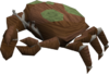 Baby giant crab (red and green) pet