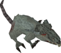 Giant rat old.png