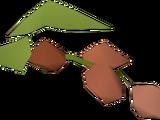 Wildblood hops