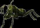 Höhlenkäfer