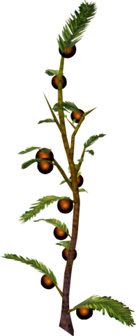 File:Cocoaberry bush.png