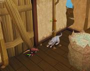 Cat and rat fight