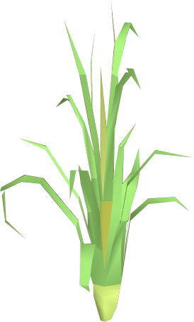 File:Fever grass detail.png