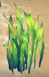 Seaweed (Aquarium) built