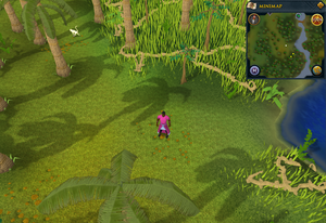 Compass clue Karamja south-west of log crossing Agility shortcut