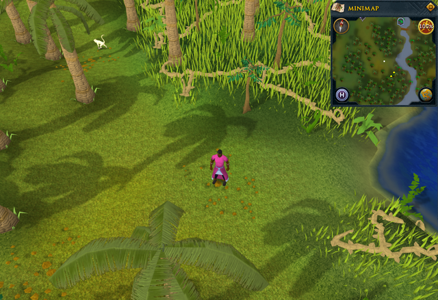File:Compass clue Karamja south-west of log crossing Agility shortcut.png