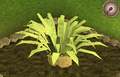 Pineapple plant 6.png