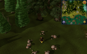 Scan clue Tirannwn south-west of Hunter training icon east of Tyras Camp