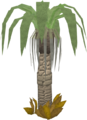 Ardigal tree.png
