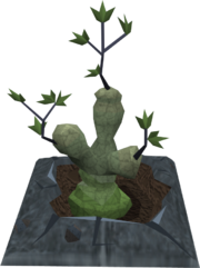 Bryll plant