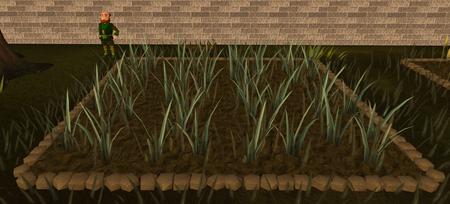 Reeds3