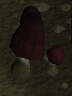 Uzer paddenstoelen