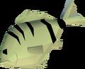 Raw cavefish detail.png