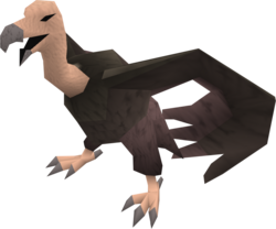 Vulture (grey) pet